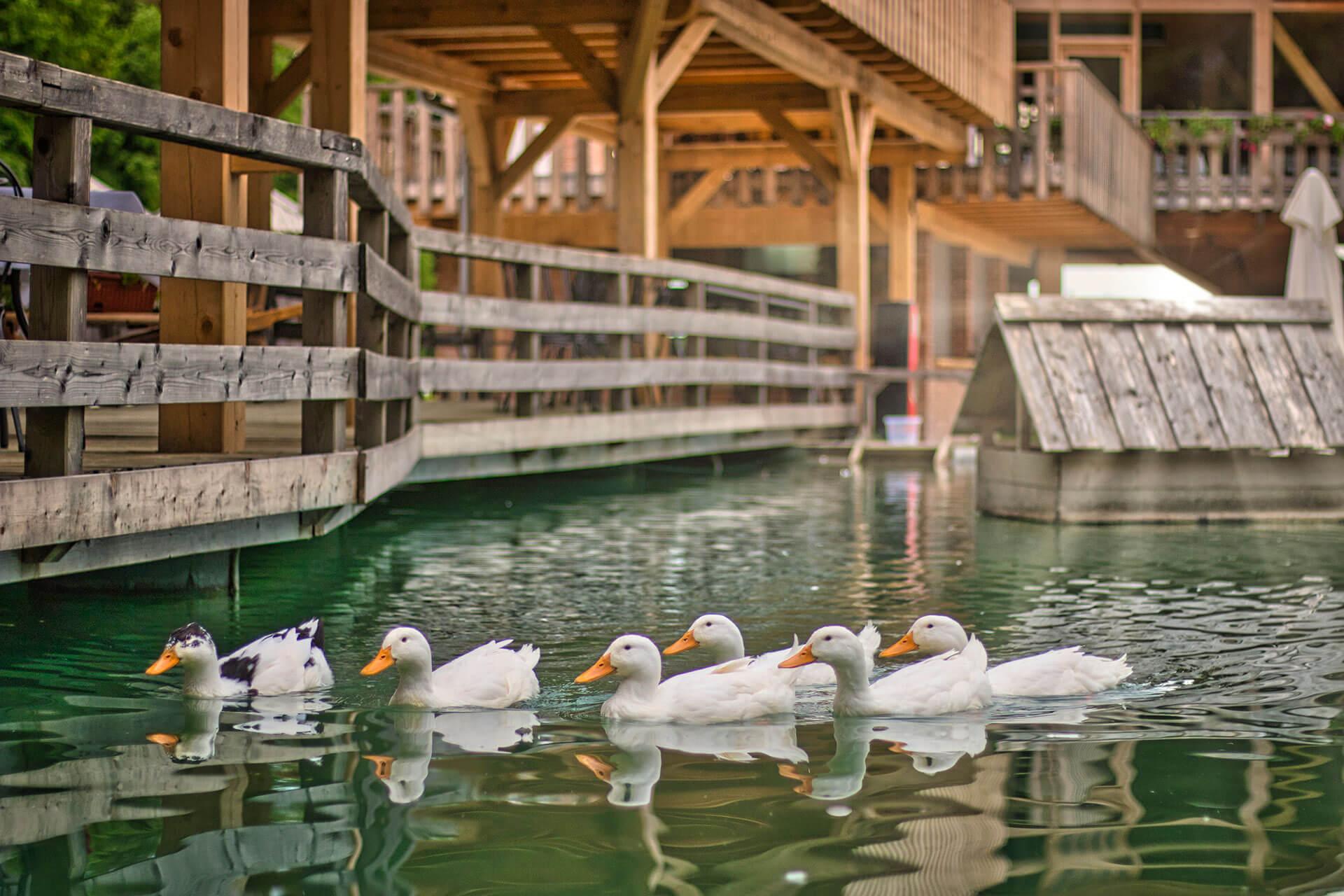 Slovenia-Eco-Resort-zivalski-vrt-03