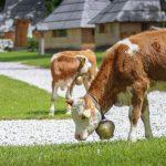 Slovenia-Eco-Resort-zivalski-vrt-05