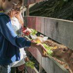 slovenia-eco-resort---hranjenje-zivali-01